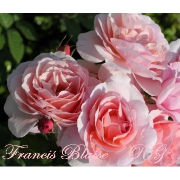 Blaise Francis